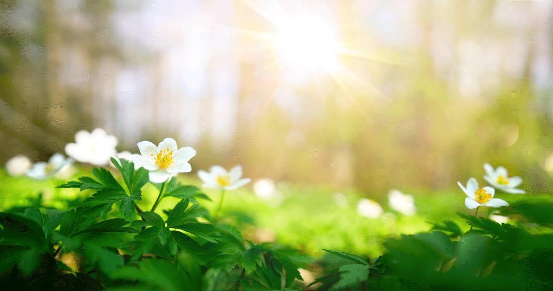 美しい朝の陽ざし風景写真